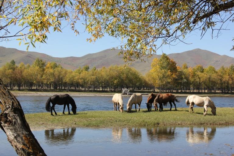 Mongolia 142