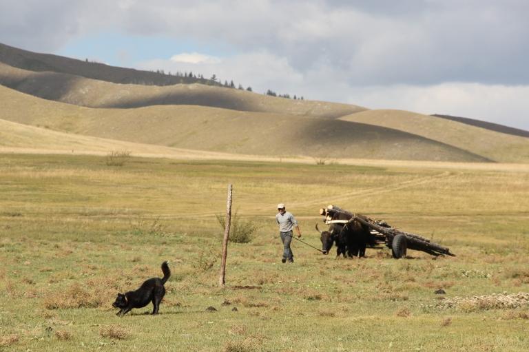 Mongolia 203